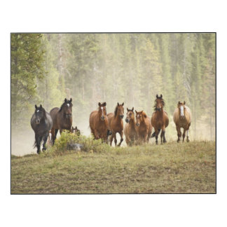 Horses cresting small hill during roundup