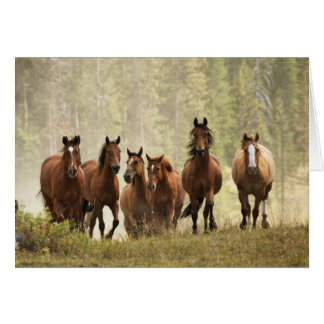 Horses cresting small hill during roundup, 2 card