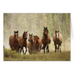 Horses cresting small hill during roundup, 2 greeting card