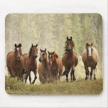 Horses cresting small hill during roundup, 2 mouse pad