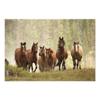 Horses cresting small hill during roundup, 2 photo print