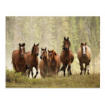 Horses cresting small hill during roundup, 2 postcard