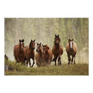 Horses cresting small hill during roundup 2 poster