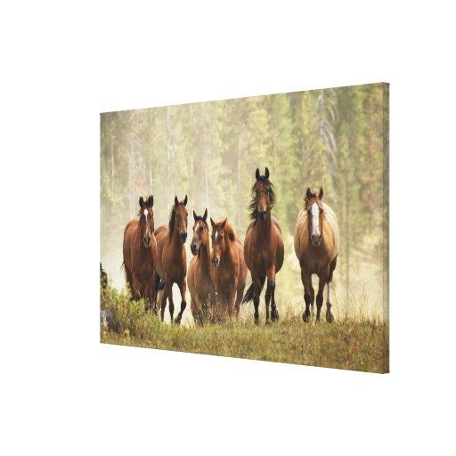 Horses cresting small hill during roundup, 2 stretched canvas print
