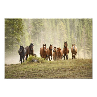 Horses cresting small hill during roundup, photo print