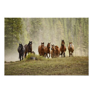 Horses cresting small hill during roundup print