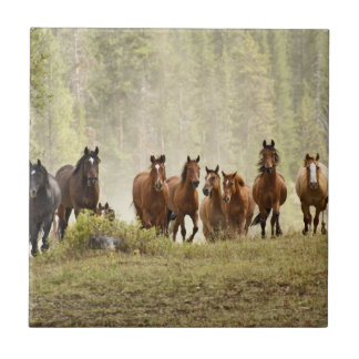Horses cresting small hill during roundup tile