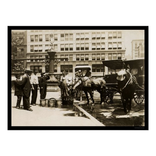 Horses Drinking Water in New York City 1911 Poster