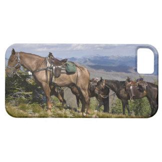 Horses (Equus ferus caballus) at scenic overview iPhone 5 Cases