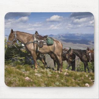 Horses (Equus ferus caballus) at scenic overview Mouse Mat