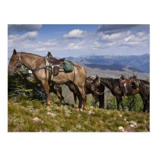 Horses (Equus ferus caballus) at scenic overview Postcard