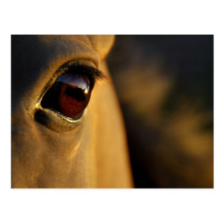 Horse's eye at sunset postcard