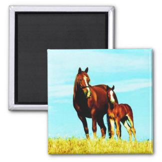 Horses Farm Cute Animal Nature Destiny Square Magnet