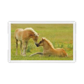 Horses foals in field. acrylic tray