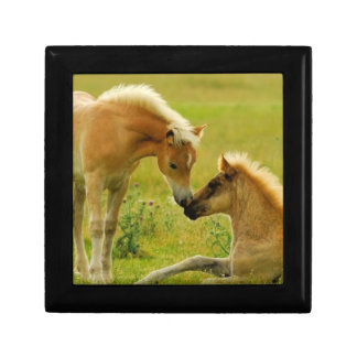 Horses foals in field. gift box