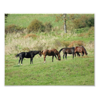 Horses Gather 10 x 8 Photographic Print