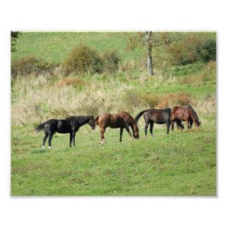 Horses Gather 10x8 Photograph Print