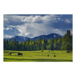 Horses graze in pasture near Whitefish, Poster