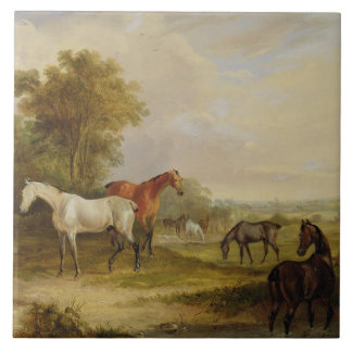 Horses Grazing: A Grey Stallion grazing with Mares Tile