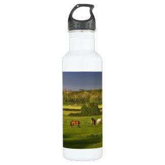 Horses grazing at Bower Hinton, Somerset 710 Ml Water Bottle
