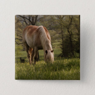 Horses grazing in meadow, Cades Cove, Great 3 15 Cm Square Badge