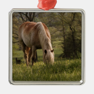 Horses grazing in meadow, Cades Cove, Great 3 Christmas Ornament