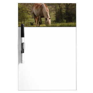 Horses grazing in meadow, Cades Cove, Great 3 Dry Erase Board
