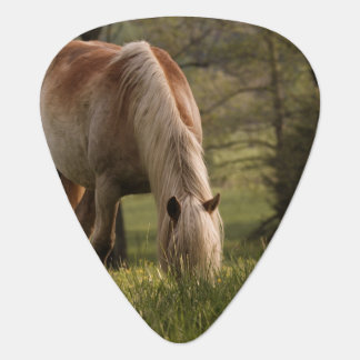 Horses grazing in meadow, Cades Cove, Great 3 Guitar Pick