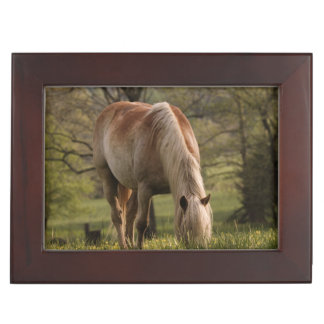 Horses grazing in meadow, Cades Cove, Great 3 Keepsake Box