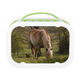 Horses grazing in meadow, Cades Cove, Great 3 Lunch Box