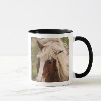 Horses grazing in meadow, Cades Cove, Great Mug