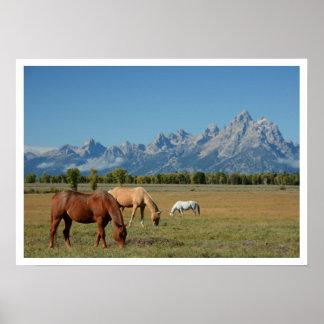 Horses Grazing in Pasture, Teton Mountains Poster