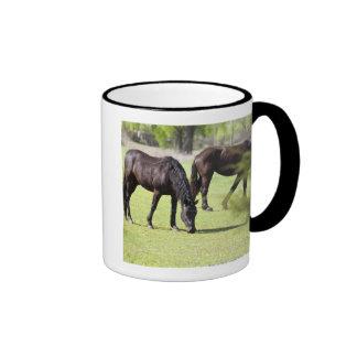horses grazing on a horse farm coffee mugs
