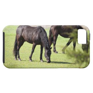 horses grazing on a horse farm tough iPhone 5 case