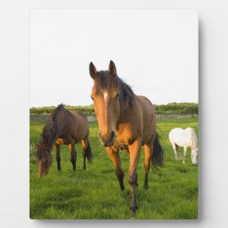 Horses Grazing Plaque