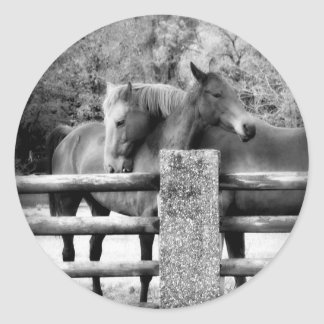 Horses Hugging - Horse Love Photograph Stickers
