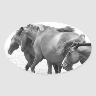 Horses in Black and White Photography Stickers