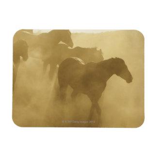 Horses in corral rectangular photo magnet