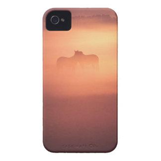 horses in dew Case-Mate iPhone 4 case