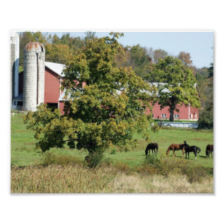 Horses in Field 10x8 Photographic Print