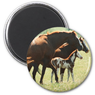 Horses in Field with Baby Colt 6 Cm Round Magnet