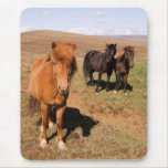 Horses in Krisuvik Mouse Mats