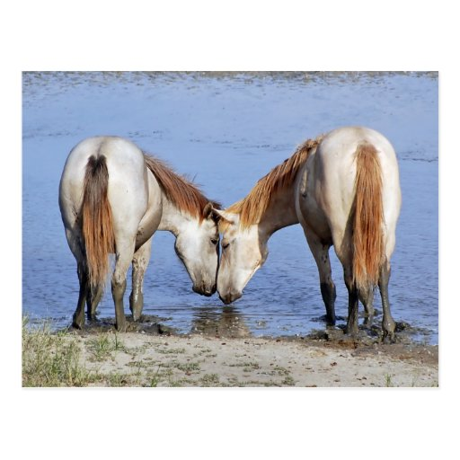 HORSES IN LOVE POST CARDS