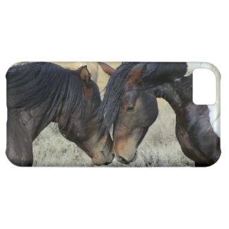 horses in love romantic iphone cover case case for iPhone 5C