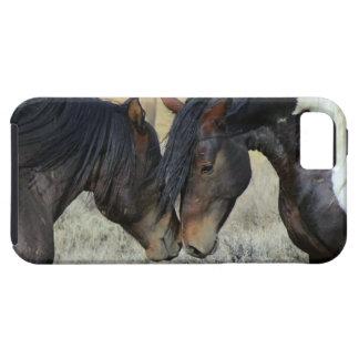 horses in love romantic iphone cover case iPhone 5 cases