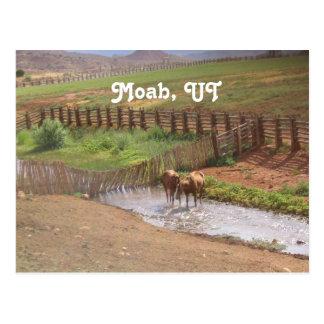 Horses in Moab Postcard