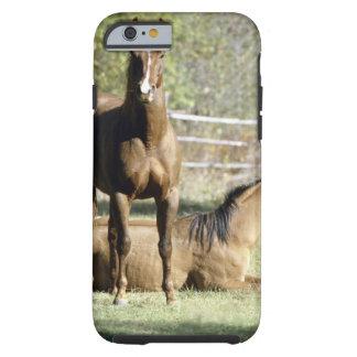 Horses in pasture tough iPhone 6 case