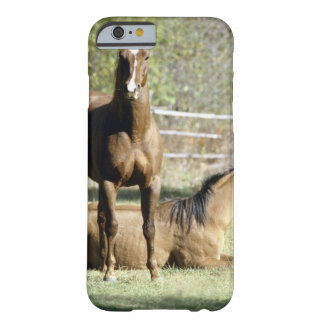 Horses in pasture barely there iPhone 6 case