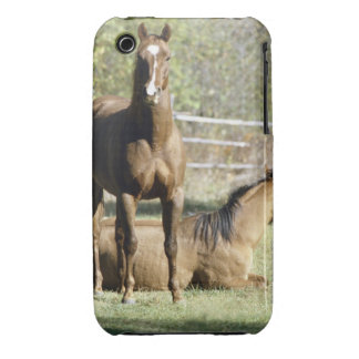 Horses in pasture Case-Mate iPhone 3 case