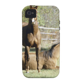 Horses in pasture iPhone 4/4S covers